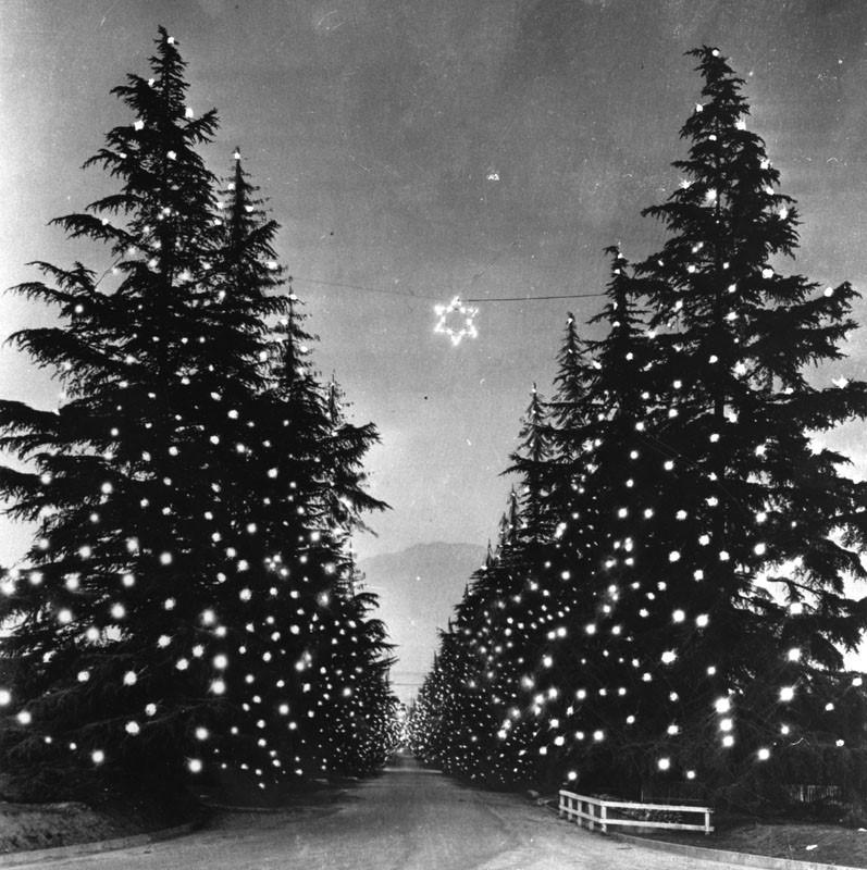 Christmas Tree Lane Los Angeles: Water And Power Associates